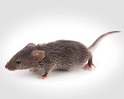 Rodent Control: Removal and Prevention