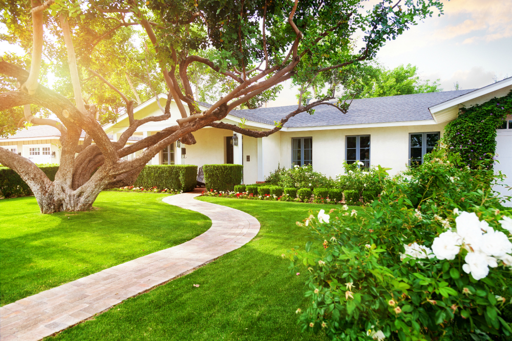 Healthy Lawn Tips for Homeowners