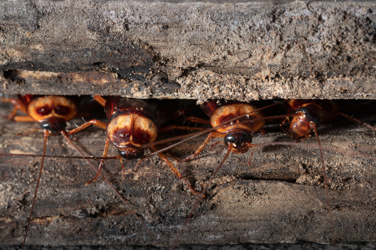 Think Roaches Can't Get Any More Disgusting? They Can.