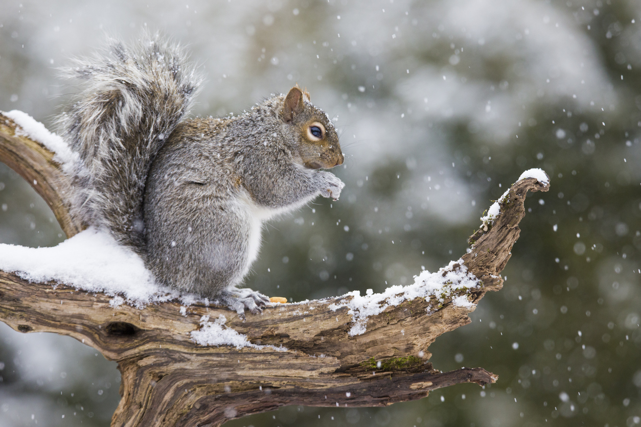 This Winter, Celebrate Your Squirrely Friends