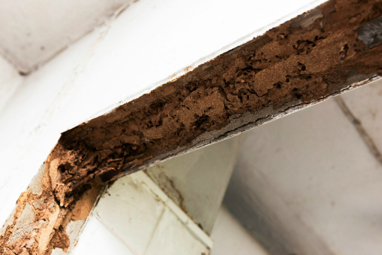 Termite Awareness Week: Everything You Need to Know to Protect Your Home