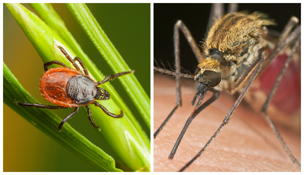 Top 10 US Cities with the Greatest Risk for Vector Pests